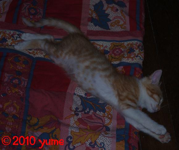 http://mystere.cowblog.fr/images/yume/mini5543.jpg